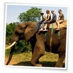 Südafrika - Reiten auf Elefanten