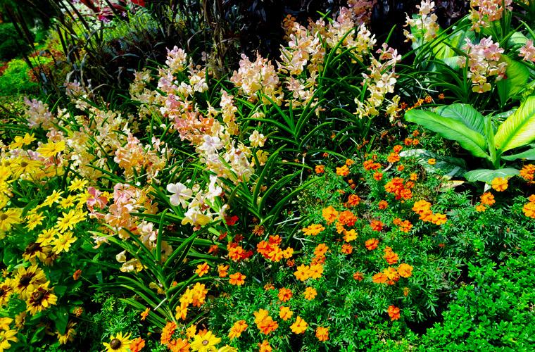 """Im """"Flower Dome"""" finden Sie farbenfrohe und abwechslungsreiche Auswahl an Blumen des mediterranen Raums."""