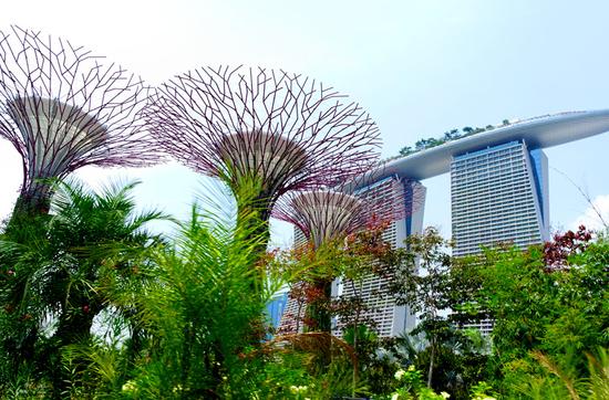 Supertrees und Marina Bay Sands im Hintergrund.