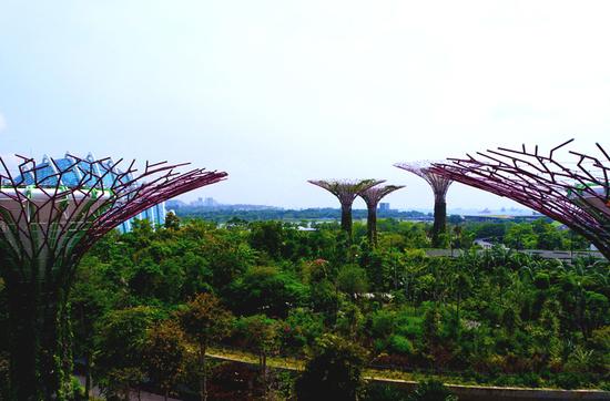 Supertrees im Gardens by the Bay - 18 bis 50 Meter große Beton- und Stahlkonstruktion.