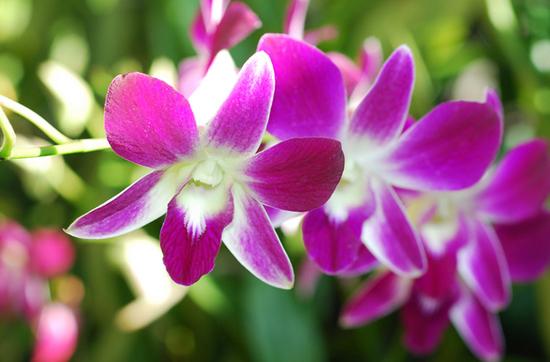 orchidee in der anzucht was ist m glich. Black Bedroom Furniture Sets. Home Design Ideas