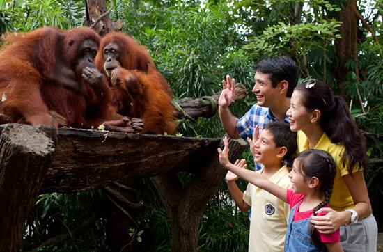 Im Zoo Singapurs gibt es viele einheimischen Tiere zu bestaunen.