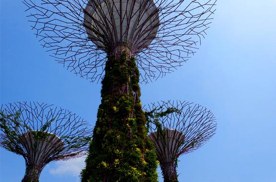 Gardens by the Bay - In den botanischen Anlagen am Hafen stehen 18 bis 50 Meter hohe, von tropischen Pflanzen bewachsene Bäume aus Beton und Stahl.
