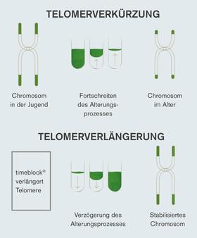 Telomerverlängerung durch timeblock®